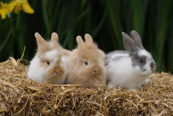 Longdown Farm Easter Egg Hunt